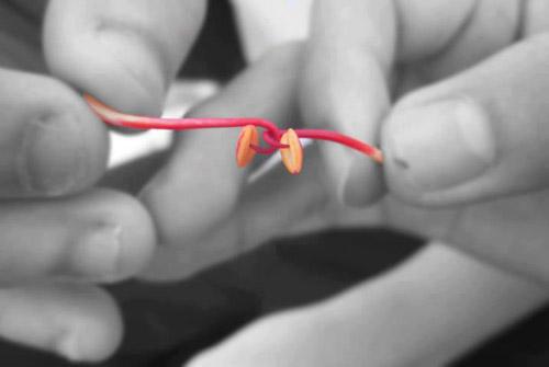 kéo ko  bằng nhị hoa phượng